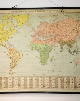 1950s CZECH MAP OF THE WORLD WITH ANIMALS: Zeměpisné rozšíření živočišstva.
