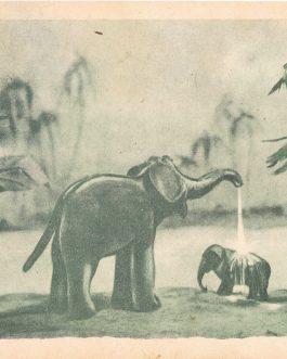 CHILDREN'S BOOK – SERBIA: У гостима код мајмуна  [U gostima kod majmuna / Visiting Monkeys].