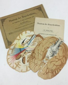 ANATOMY – MEDICINE: Phantom des Menschenhirns. Als Supplement zu jedem anatomischen Atlas [Phantom of the Human Brain. As a Supplement to Every Book on Anatomy]